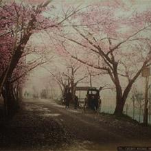 vancouver fine art sale kusakabe kimbei Cherry Avenue